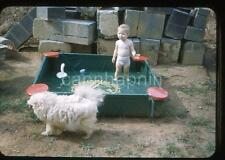 Tiny Kid & Dog at Kiddie Swiming Pool Vintage 1950s Slide Photo