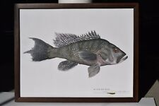 """Great fish Pictures BLACK SEA BASS  FRAMED  14.75""""x12.75"""""""
