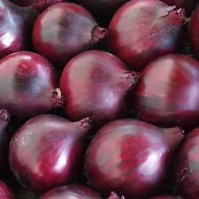Vegetables - Onion - Magnate F1 - 25 Seed - Economy Pack