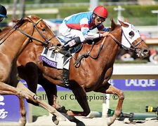 Groupie Doll 2013 Breeders' Cup Filly & Mare Sprint 8x10 Photo