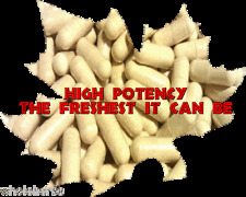 Psyllium Husk Rich Fiber Bowel Movement The Freshest It Can Be 100 X CAPSULES
