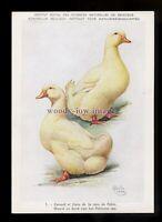 an0286 - Farm Birds - Pekinese Ducks by the Artist Delin 1949 - postcard