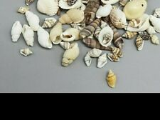 Mini Natural Seashell DIY Handcrafts Decor Fashion Loose Beads Sea Shell Jewelry