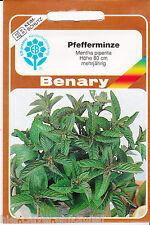 Pfefferminze Minze Mentha piperita mehrjährig ca.300 Pflanzen Benary Samen