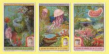 LIEBIG - SET OF 6 CARDS -  S 1133  /  F 1132  -  PHOSPHORESCENT SEA LIFE -  1922