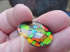 (J-479) Red Green oval teardrop Ammolite fossil shell loose cabochon jewelry