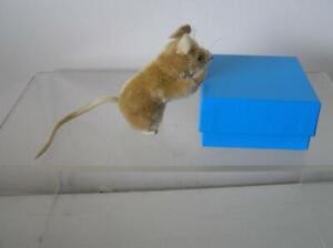 Steiff Pieps White Mohair Mouse