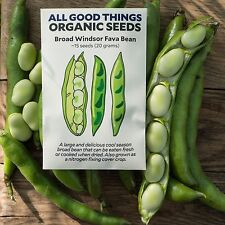 Broad Windsor Fava Bean Seeds (~15): Certified Organic, Non-GMO Heirloom