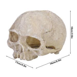 Skull Statue Skull Statue Decor Elegant Resin Pet Cave Fish Tank for Aquarium