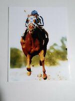 SECRETARIAT -1973 TRIPLE CROWN WINNER -  COLOR 8X10 PHOTO - BELMONT STAKES