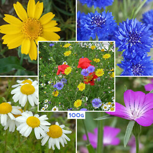 100g Wild Flower Seed Mix Annual Meadow 100% Wildflower Mixed for Bees Butterfly