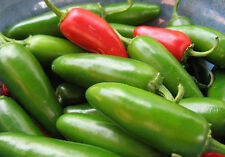 Hot ,bulet Chilli , 50 Seeds, SVS-831, F1 Hybrid  (Vegetable seeds)