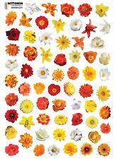 Aufkleber Sticker Wandsticker Wandaufkleber Fenster Geschirr Blumen Rot Gelb WC