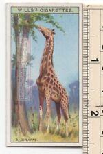 Giraffe Africa Tallest Land Mammal Long Neck 90+ Y/O Ad Trade Card