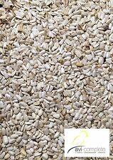 2,5kg Sonnenblumenkerne weiß, mittel (4,34€/kg) von avi-complete