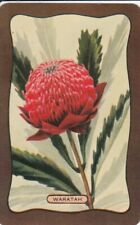 VINTAGE COLES BLANK BACK SWAP CARD - 1 SINGLE - WARATAH