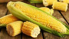 40Pcs Corn Vegetable Tree Seeds 8 Types Delicious Organics Edible Plants