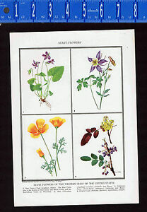 State Flowers Western United States: CA, CO, OR, IL - 1932 Color Print