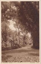 Trinidad & Tobago,B.W.I.Caribbean,Co unty Road,c.1909