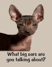 METAL REFRIGERATOR MAGNET Young Toy Xoloitzcuintili Dog What Big Ears Humor