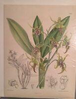 ORIGINAL 1800'S Botanical Engraved Print Hand Colored