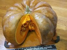 Fairy Tale Pumpkin- 10 Usa Seeds. Delicious French heirloom! Easy to grow.