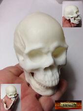 M00535 Morezmore Realistic Human Mini Skull 10 cm Art Sculpture Doll Anatomy Dsi