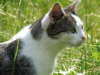 20 g  Amazon Pro Wurmkur / Entwurmung ohne Chemie, für Katzen