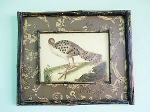 BEAUTIFULLY  FRAMED ANTIQUE BIRD PRINT UNIQUE AUDUBON STYLE OF ONE OF A PAIR