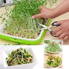 Plant Germination Tray Plant Grow Seed Starter Nursery Box For Garden With Cover