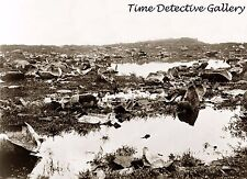 Remains of Tortoises Killed by Hunters Galapagos Is. -1903- Historic Photo Print