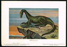 1900 Protorosaurus Dinosaur, First Lizard Prehistoric Animal - Antique Print