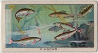 Raising And Breeding Golden Carp and Goldfish 1920s Ad Trade Card