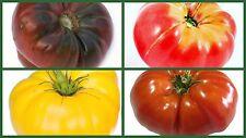 Brandywine Tomato Seeds, Brandywine Tomatoes, 4 Pk Special, Heirloom, 10% Off!