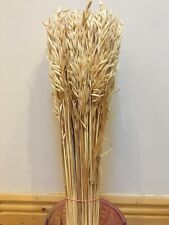 DRIED WHEAT FOR FLOWERS ARRANGING