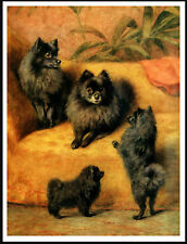 POMERANIAN DOGS AND PUPPIES CHARMING IMAGE DOG PRINT POSTER