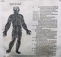 Rare 1614  Gravures Neurologie Chirurgie Ambroise Paré Anatomie Nerfs Veines