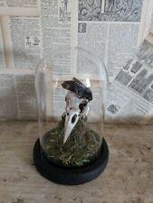 Taxidermy crow skull with a Death's-head hawk moth , women / man cave
