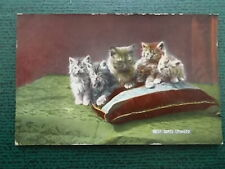 VINTAGE CAT POSTCARD - BEST SEATS ENGAGED - CATS KITTENS