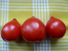 Herztomaten, Teton de Venus Tomaten, Gemüse Saatgut 10+Stück aus Eigenanbau