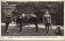 Regimental mascot Mule & Baboon 2nd Battalion Middlesex Regiment
