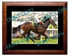 BLACK CAVIAR, HORSE RACING CHAMPION A3 LARGE PHOTO 6