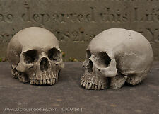 PAIR OF HUMAN SKULL REPLICAS (natural), full size, plaster of Paris