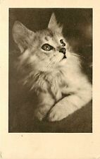 Vintage Lithographed Cat Pc, Long Haired Silver Tabby Kitten Aspca Vienna