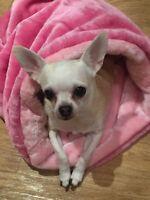 CHIHUAHUA PUPPY DOG PINK PET CAT BED SNUGGLE SACK SAK BAG