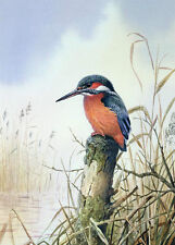 Oil painting nice birds on branch In the reeds Waiting for prey Hand painted