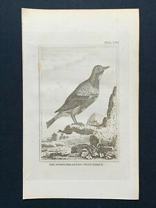 1812 Bird Print THE PURPLE CRESTED CHATTERER Natural History by Count de Buffon