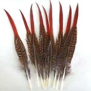 Golden Red Burnt Tipped Pheasant Feathers Wedding Millinery Craft Costume 5 pcs