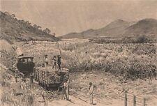 Sugar Harvest. Brazil 1885 old antique vintage print picture
