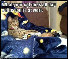 Funny Cat Humor What Your Cat Does All Day Refrigerator Magnet